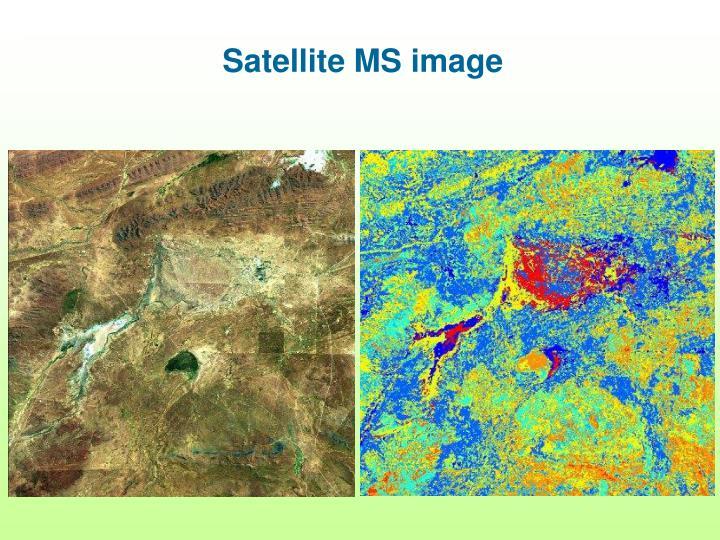 Satellite MS image