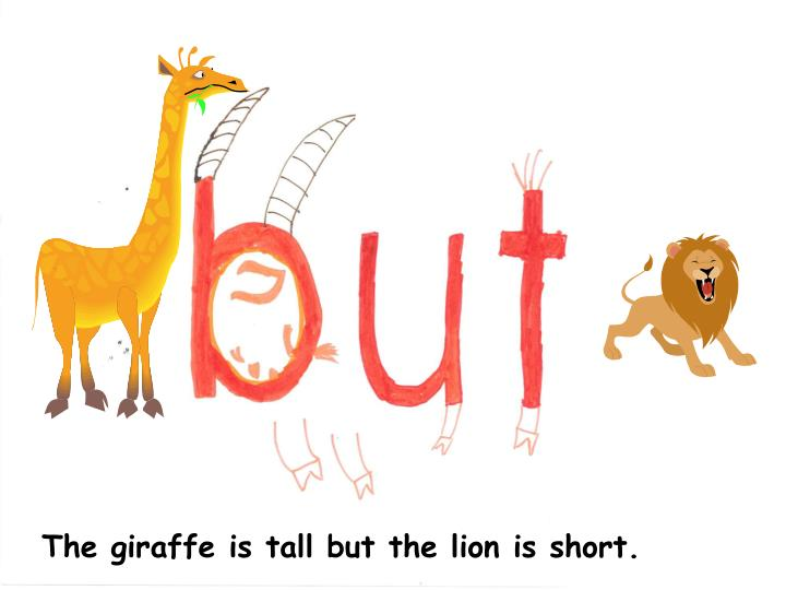 The giraffe is tall but the lion is short.