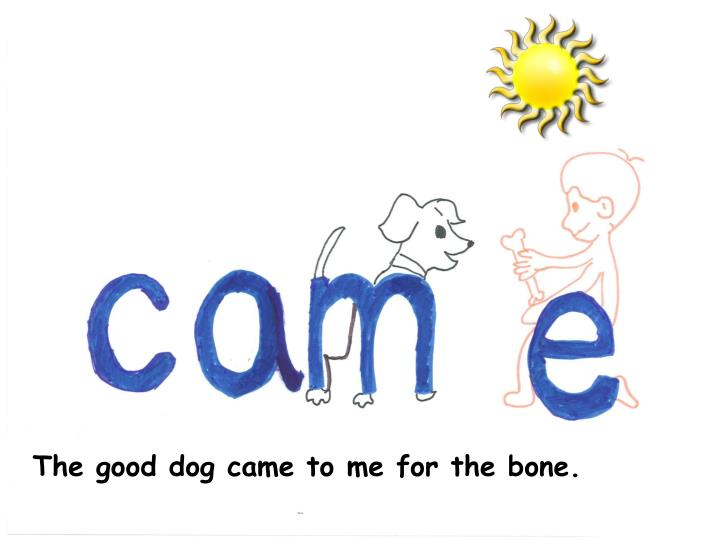 The good dog came to me for the bone.