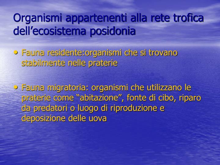 Organismi appartenenti alla rete trofica dell'ecosistema posidonia