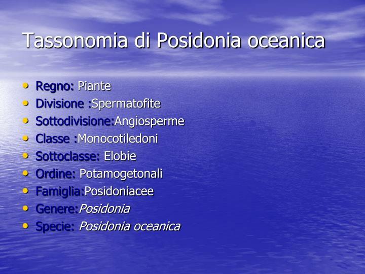 Tassonomia di Posidonia oceanica