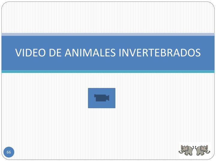 VIDEO DE ANIMALES INVERTEBRADOS