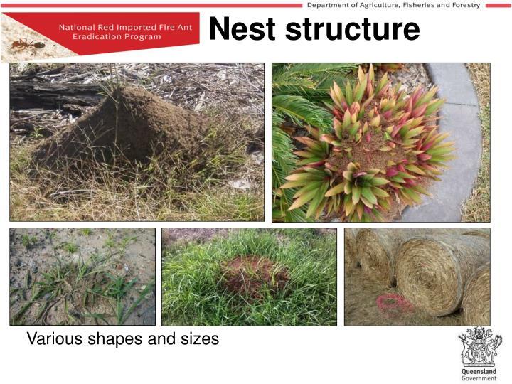 Nest structure