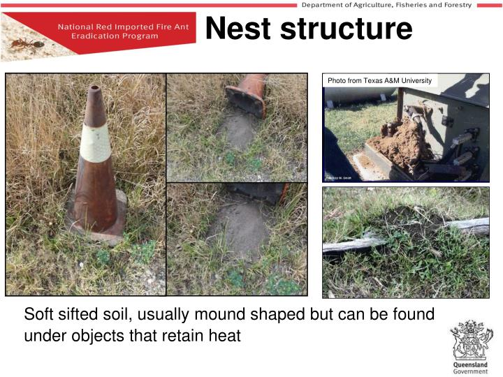 Soft sifted soil, usually mound shaped but can be found under objects that retain heat