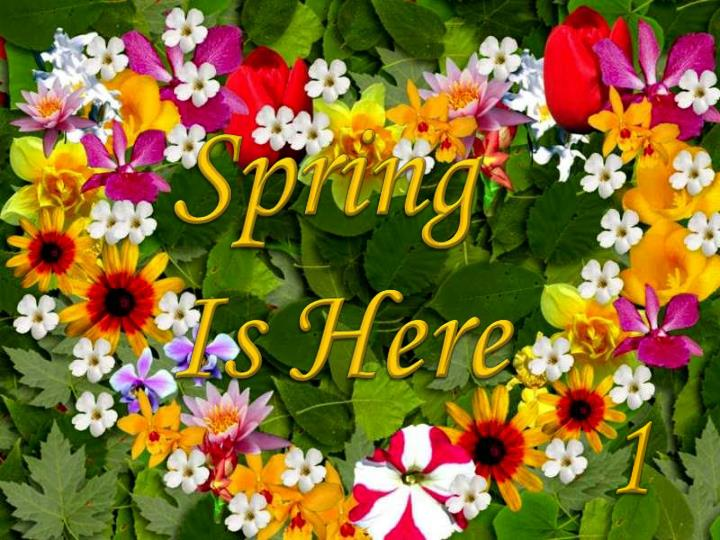 Spring is here judy housewife