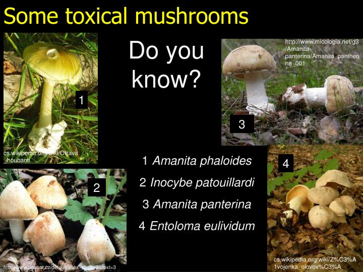 Some toxical mushrooms