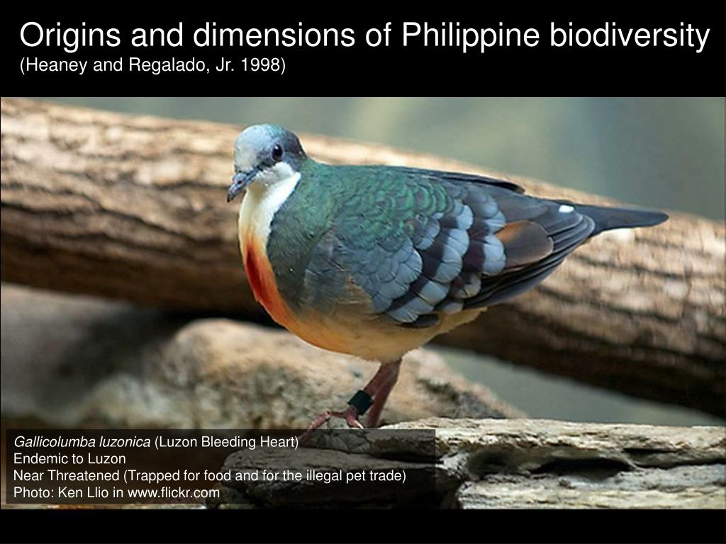 PPT - Hottest of the hotspots: Philippine biodiversity in peril