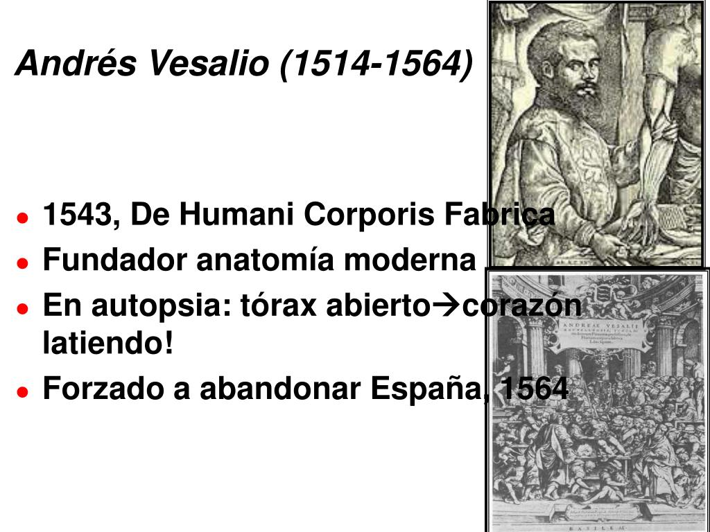 PPT - Andrés Vesalio (1514-1564) PowerPoint Presentation - ID:4995580