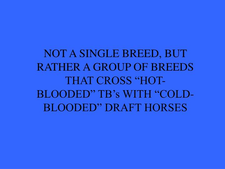 """NOT A SINGLE BREED, BUT RATHER A GROUP OF BREEDS THAT CROSS """"HOT-BLOODED"""" TB's WITH """"COLD-BLOODED"""" DRAFT HORSES"""