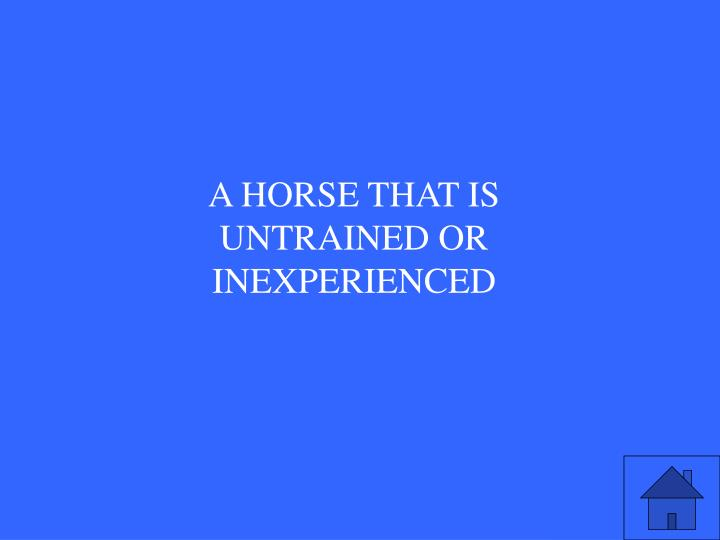 A HORSE THAT IS UNTRAINED OR INEXPERIENCED