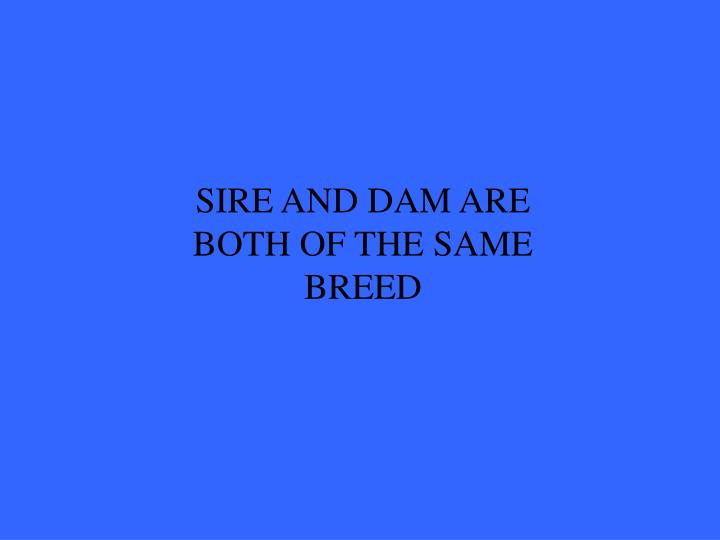 SIRE AND DAM ARE BOTH OF THE SAME BREED