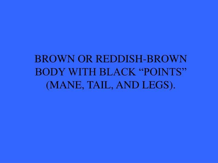 """BROWN OR REDDISH-BROWN BODY WITH BLACK """"POINTS"""" (MANE, TAIL, AND LEGS)."""