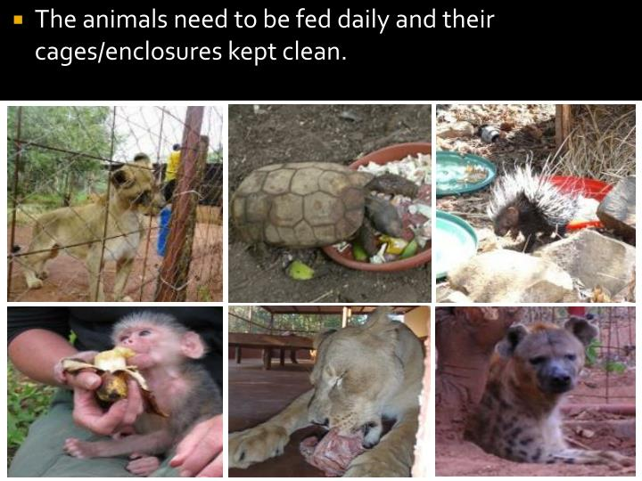 The animals need to be fed daily and their cages/enclosures kept clean.