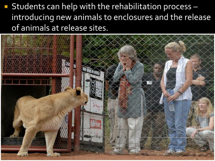 Students can help with the rehabilitation process – introducing new animals to enclosures and the release of animals at release sites.