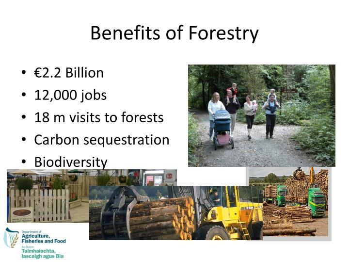 Ppt Forestry And Forest Policy In Ireland Powerpoint
