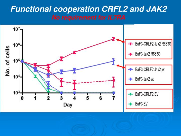 Functional cooperation CRFL2 and JAK2