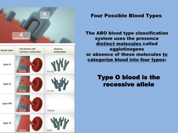 Four Possible Blood Types