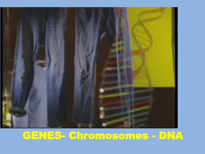 GENES- Chromosomes - DNA
