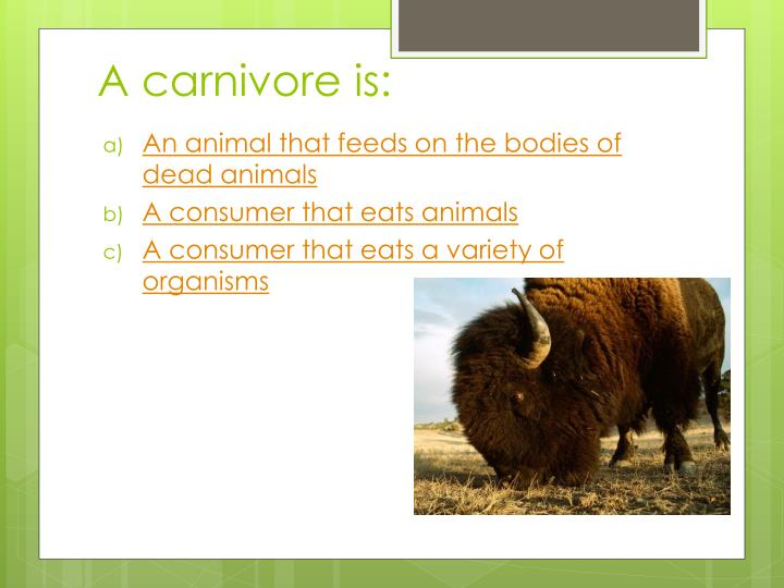 A carnivore is: