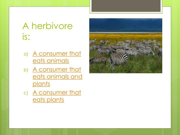 A herbivore is:
