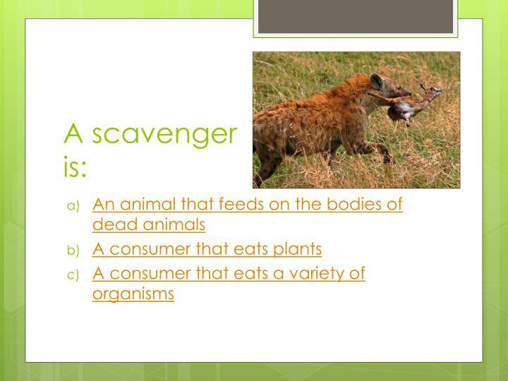 A scavenger is: