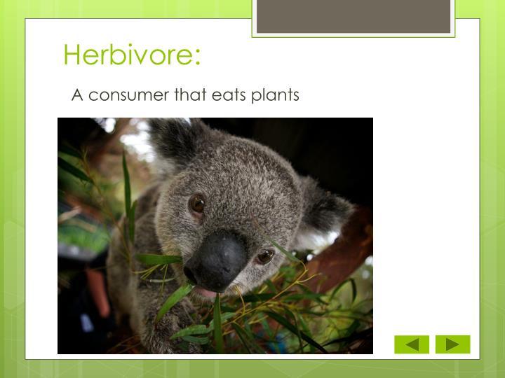 Herbivore: