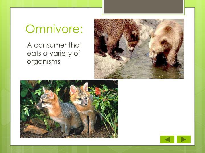 Omnivore: