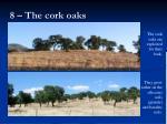 8 the cork oaks