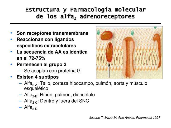 Estructura y Farmacología molecular