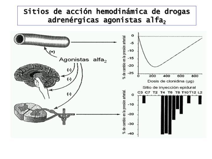 Sitios de acción hemodinámica de drogas adrenérgicas agonistas alfa
