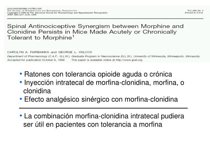 Ratones con tolerancia opioide aguda o crónica