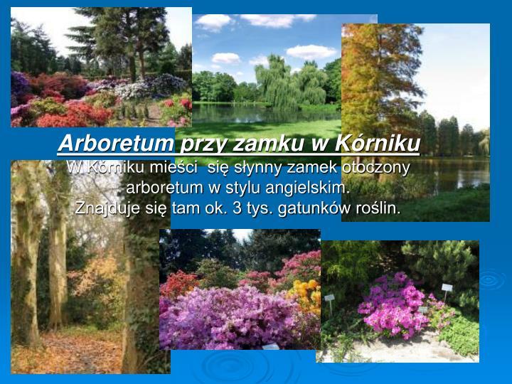 Arboretum przy zamku w Kórniku