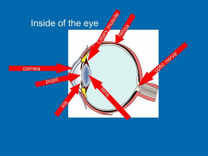 Inside of the eye