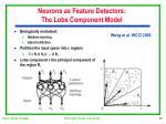 neurons as feature detectors the lobe component model
