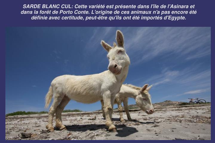 SARDE BLANC CUL: Cette variété est présente dans l'île de l'Asinara et dans la forêt de Porto Conte. L'origine de ces animaux n'a pas encore été définie avec certitude, peut-être qu'ils ont été importés d'Egypte.