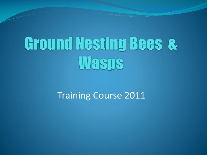 ground nesting bees wasps n.
