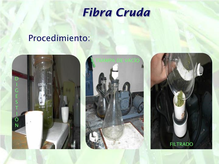 Fibra Cruda
