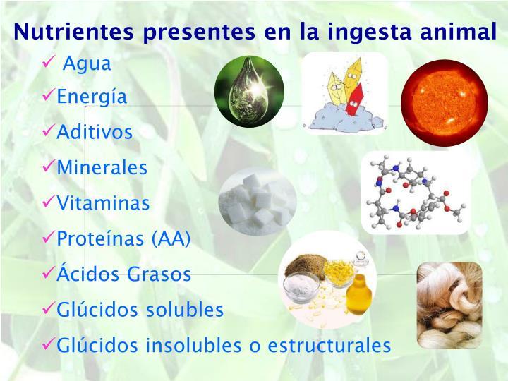 Nutrientes presentes en la ingesta animal