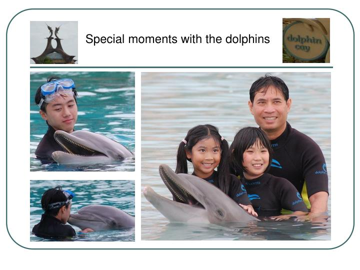 Special moments with the dolphins