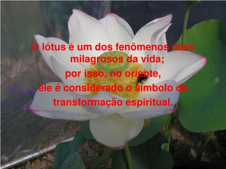 O lótus é um dos fenômenos mais milagrosos da vida;