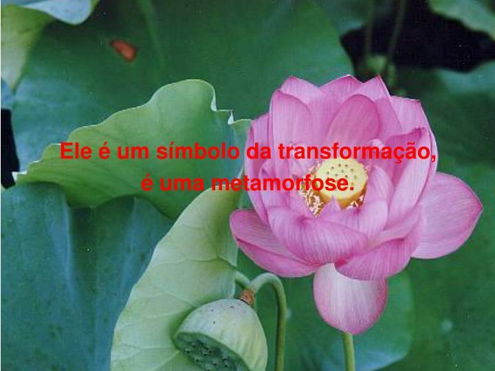Ele é um símbolo da transformação,