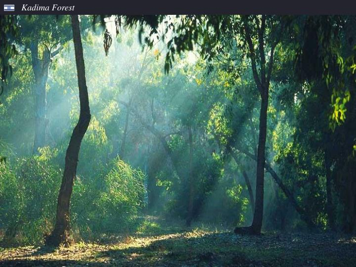 Kadima Forest