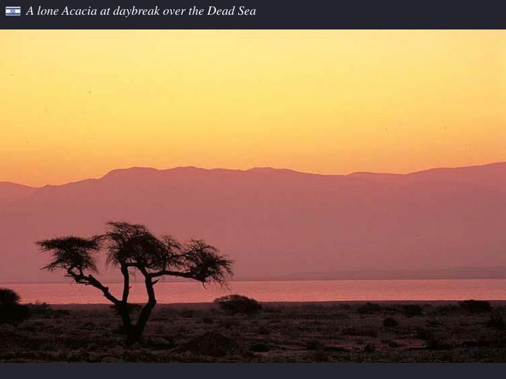 A lone Acacia at daybreak over the Dead Sea