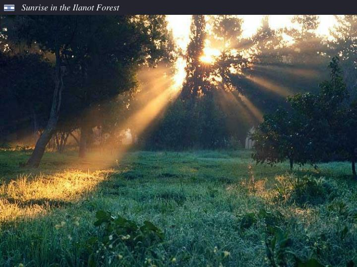 Sunrise in the Ilanot Forest
