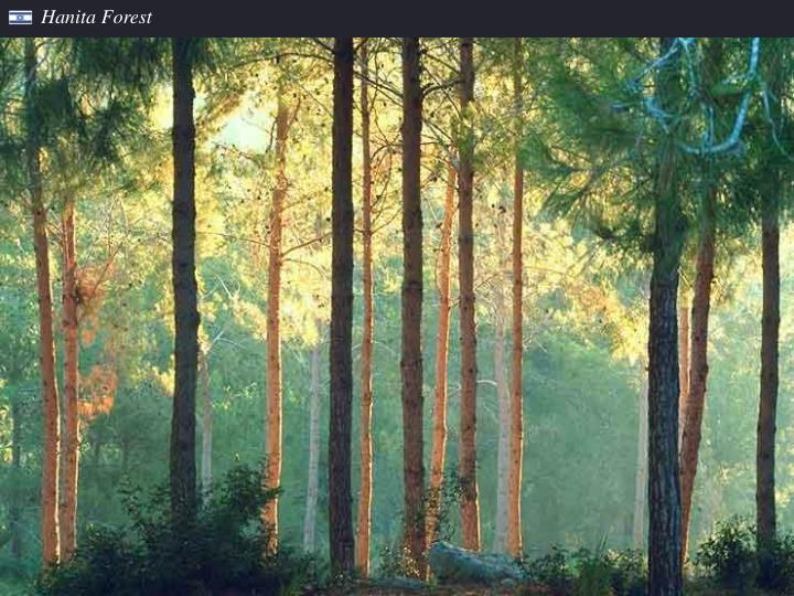 Hanita Forest
