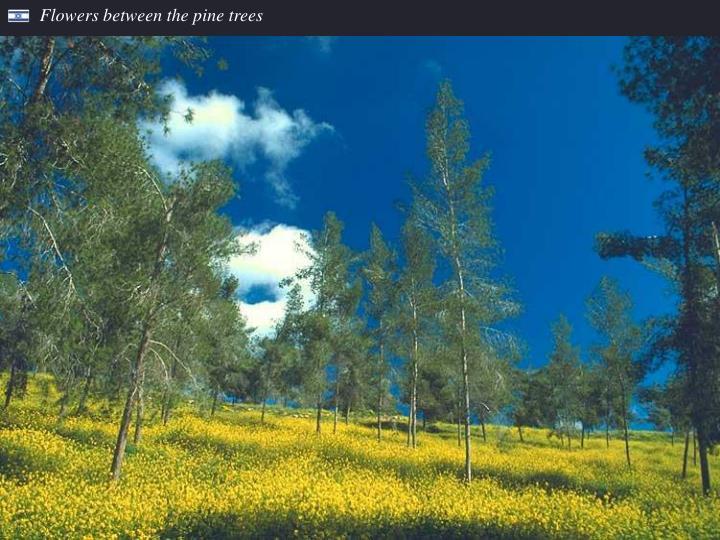 Flowers between the pine