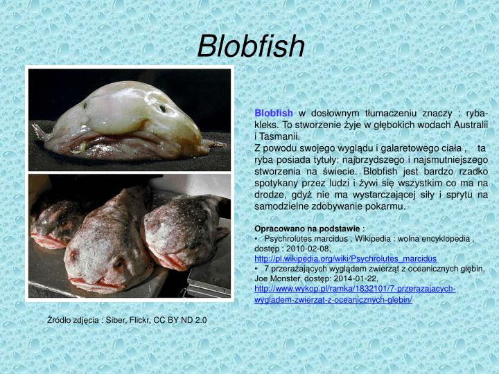 PPT - Blobfish PowerPoint Presentation - ID:5032688