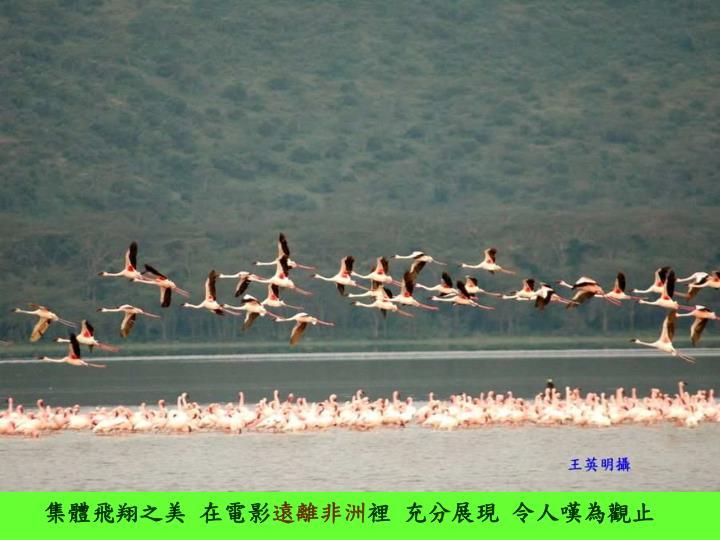 集體飛翔之美 在電影