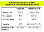 comparison of cyclic and non cyclic photophosphorylation