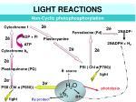 light reactions3